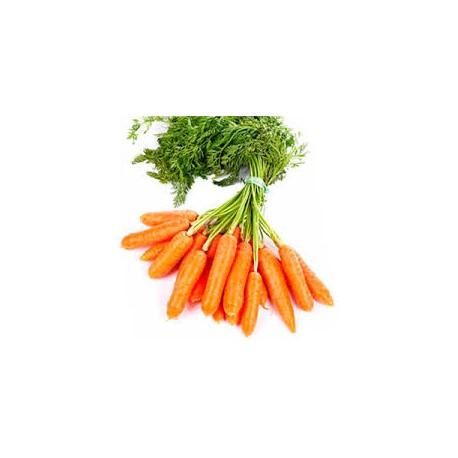 Zanahoria baby ORGANICA - at