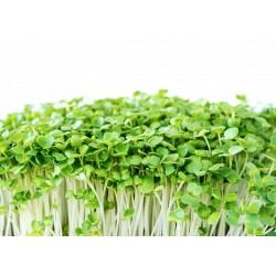 Microgreens de RUCULA ORGANICA - petaca
