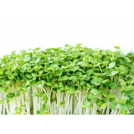 Microgreens Rucula - 100 gr