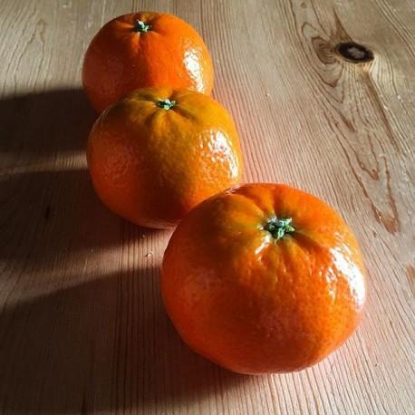 Mandarina ORGÁNICA x 2kg