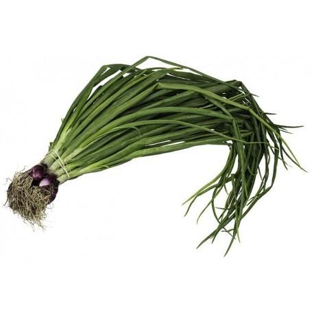 Cebolla de Verdeo Organica - at