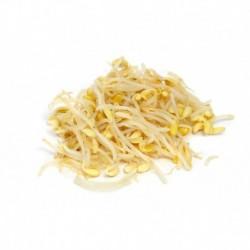Brotes de Soja - 1/2 kg